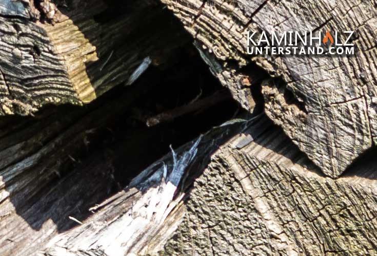 Kaminholzscheite draußen für Firewood Shelter Keter
